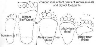 Foot Print Comparison Source Unknown