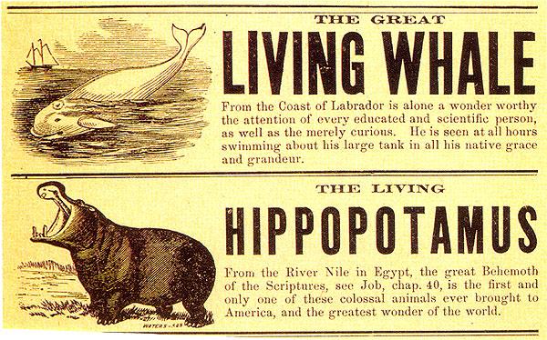 4-PT-Barnum-Whale-Hippo