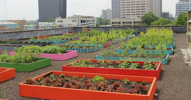 homeless-rooftop.garden